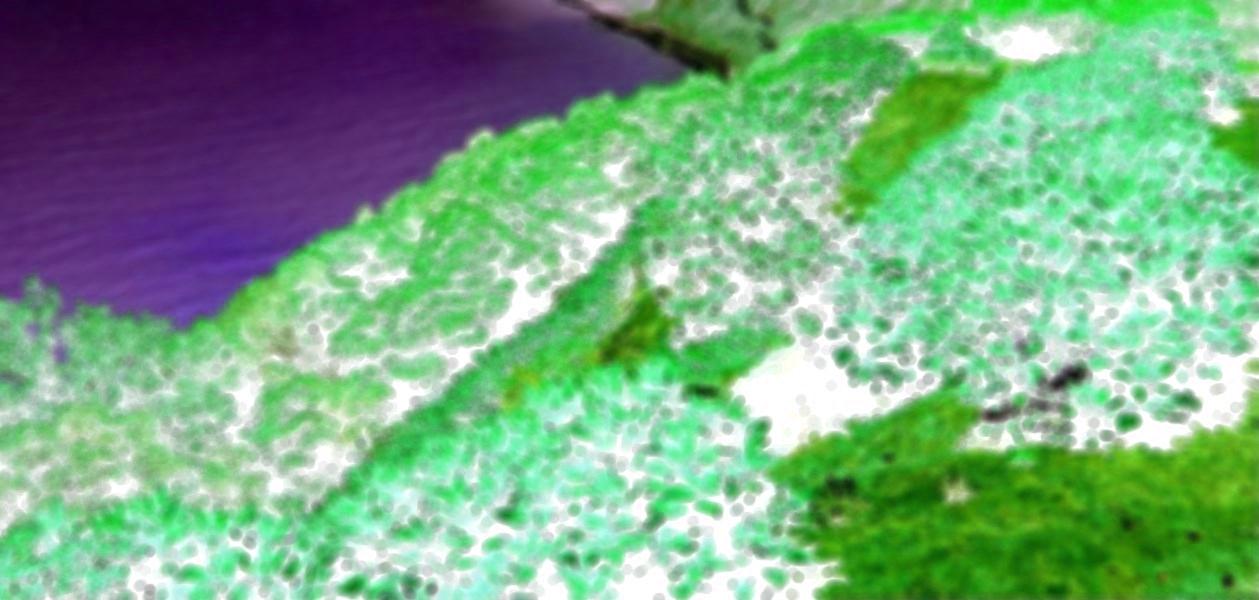 tourisme-vert.jpg